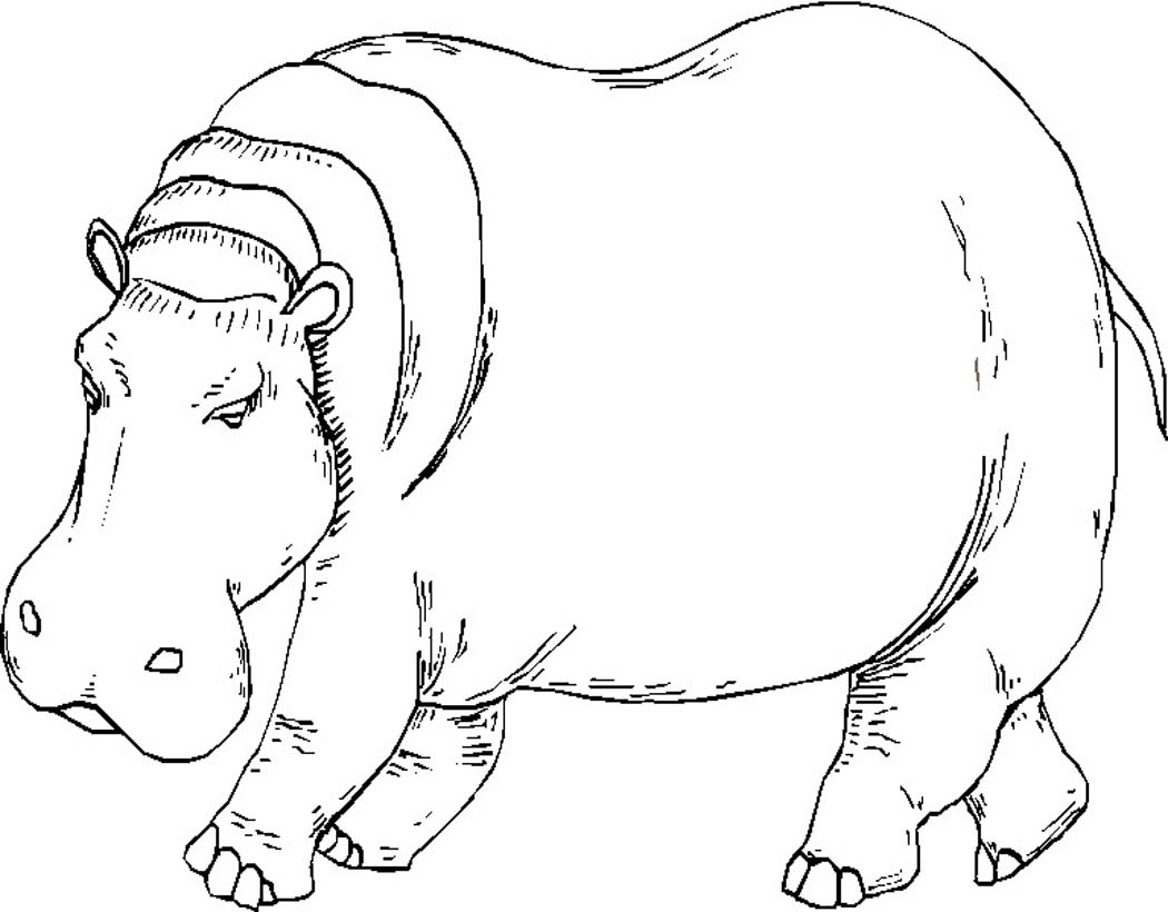 1050x820 Awesome Hippo Coloring Page 77 With Additional Line Drawings
