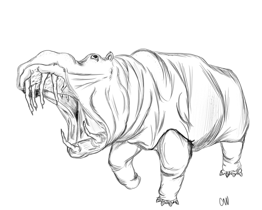 900x720 Hippo Sketch By Magnoliamonster