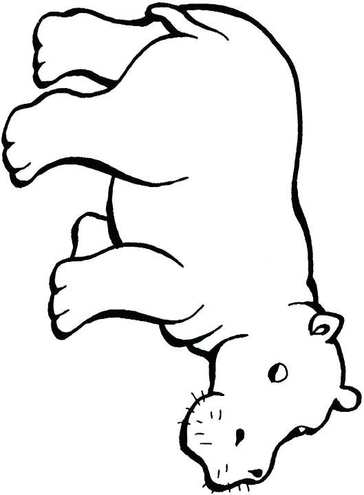 529x720 Baby Hippo Coloring Pages Pin Drawn Outline 6 Cute