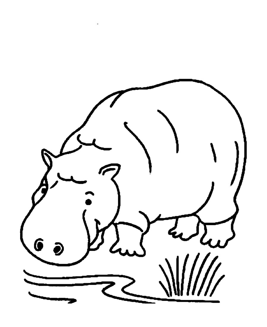 900x1101 Printable Hippo Coloring Pages Me