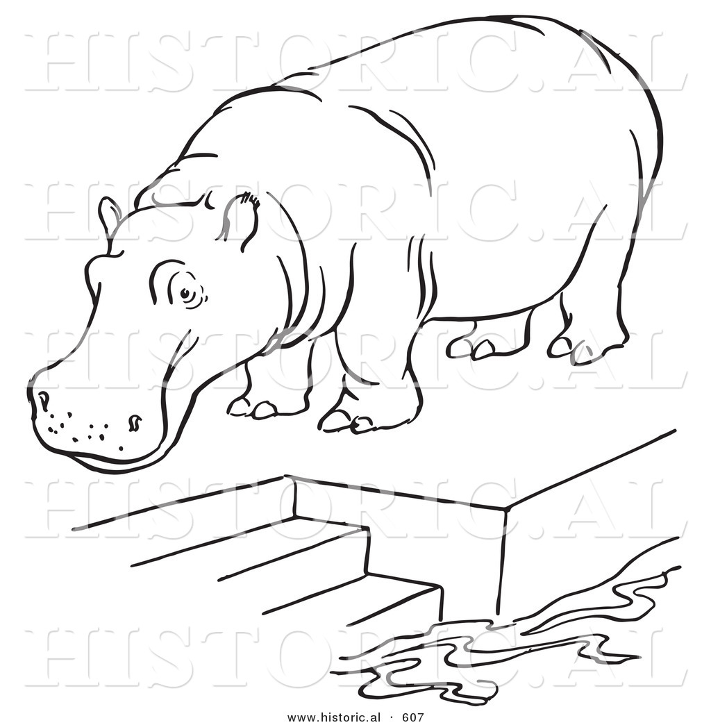 1024x1044 Historical Vector Illustration Of A Zoo Hippo Standing On A Pool