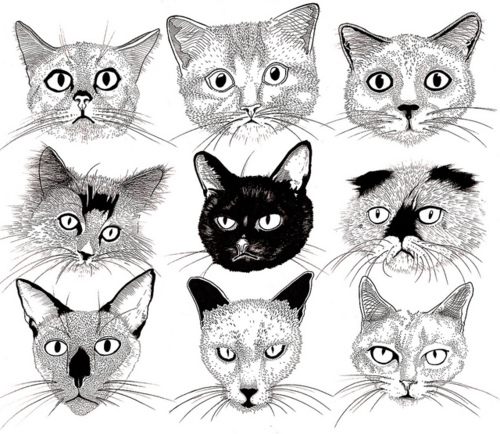 500x434 Cats Cat, Illustrations And Drawings