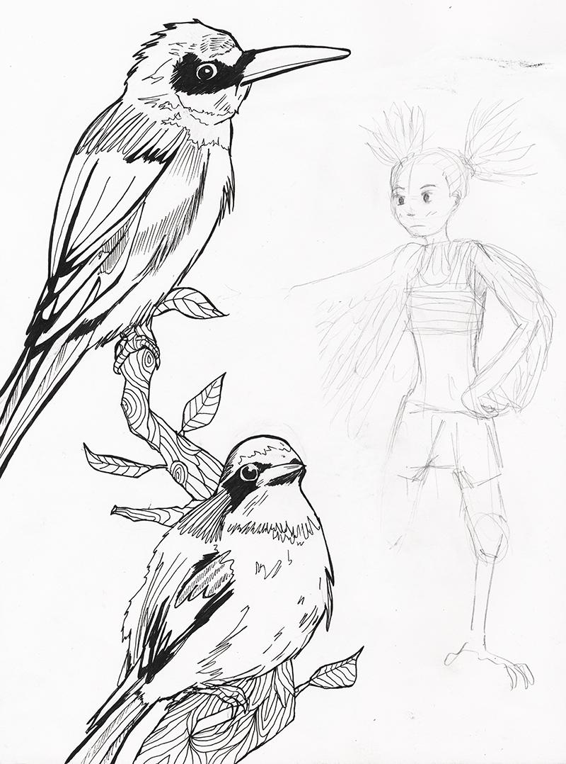 800x1078 Katie Macon Bird Drawings