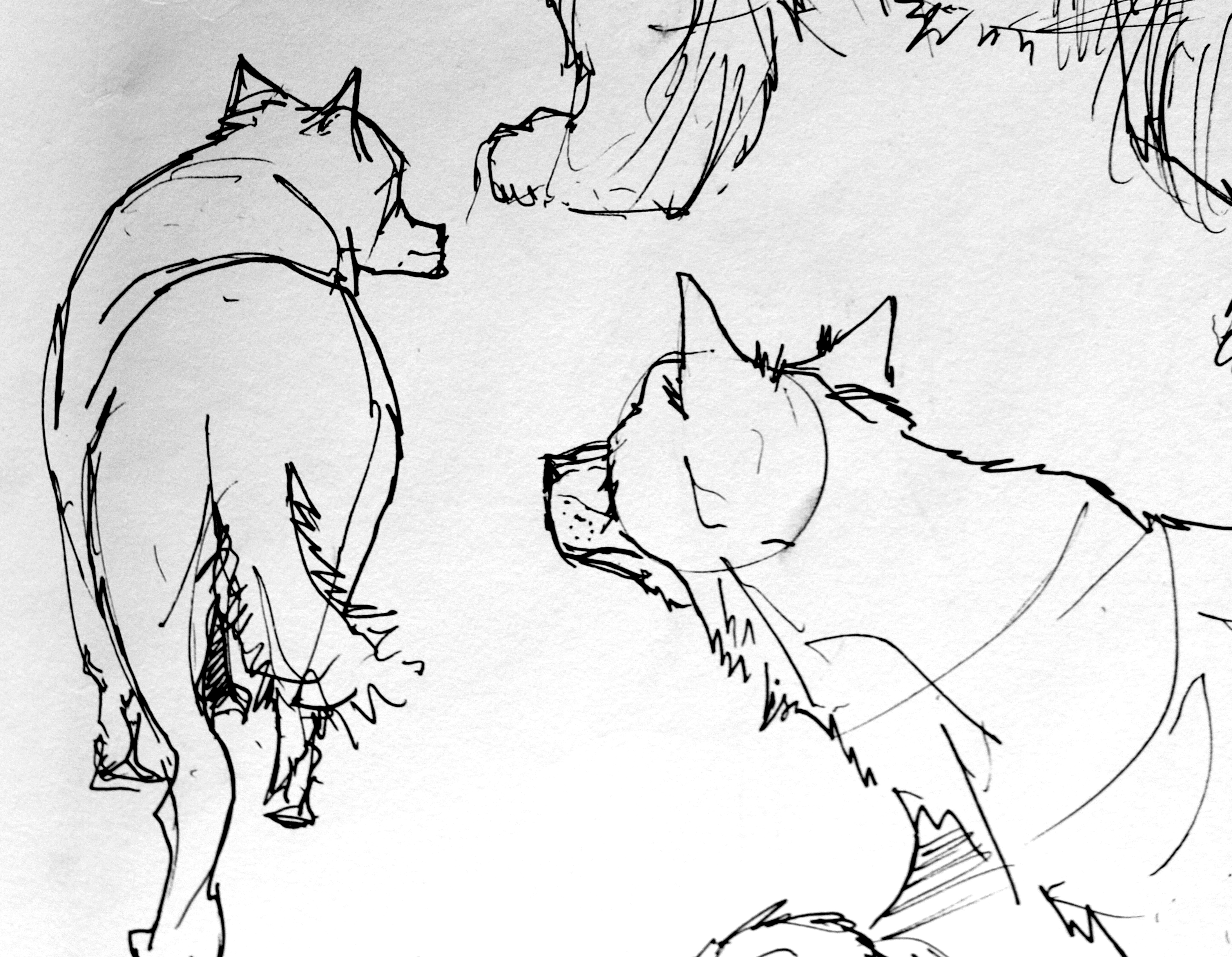 4248x3300 Animal Drawing