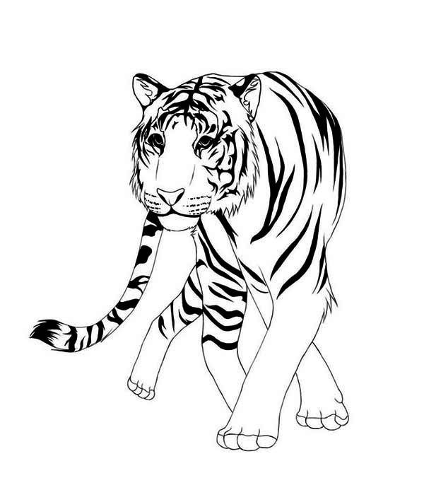 600x676 Easy Animal Coloring Pages Asian Animal Drawings Coloring Pages