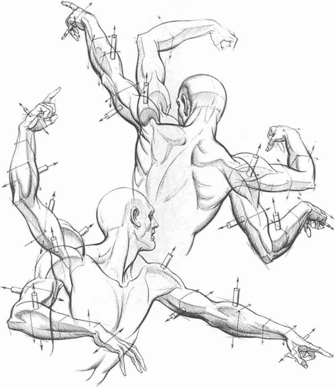 1092x1261 Hogarth Dynamic Anatomy Expressions And Anatomy