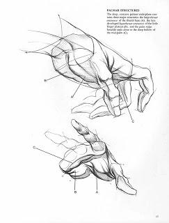 243x320 Anatomie Artistica Burne Hogarth Amp Gheorghe Ghitescu Burne