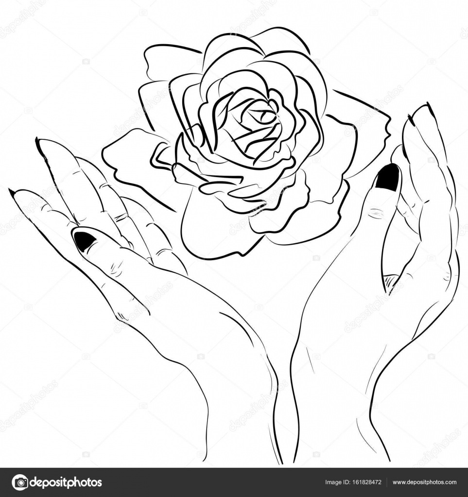 963x1024 Hands Holding A Rose Flower Isolated Outline Stock Vector