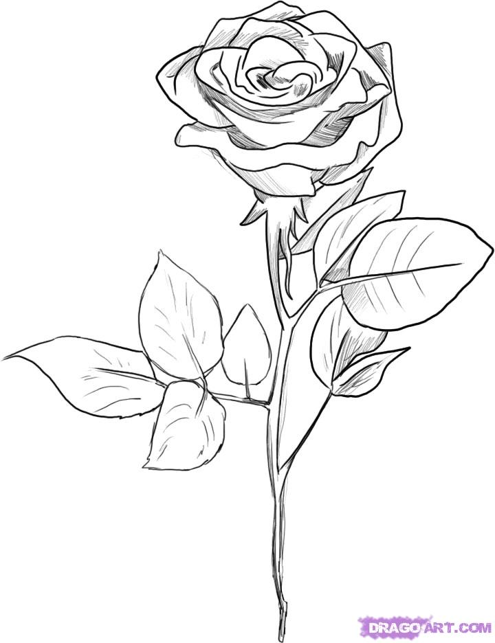 720x936 How To Draw A Black Rose, Step By Step, Flowers, Pop Culture, Free