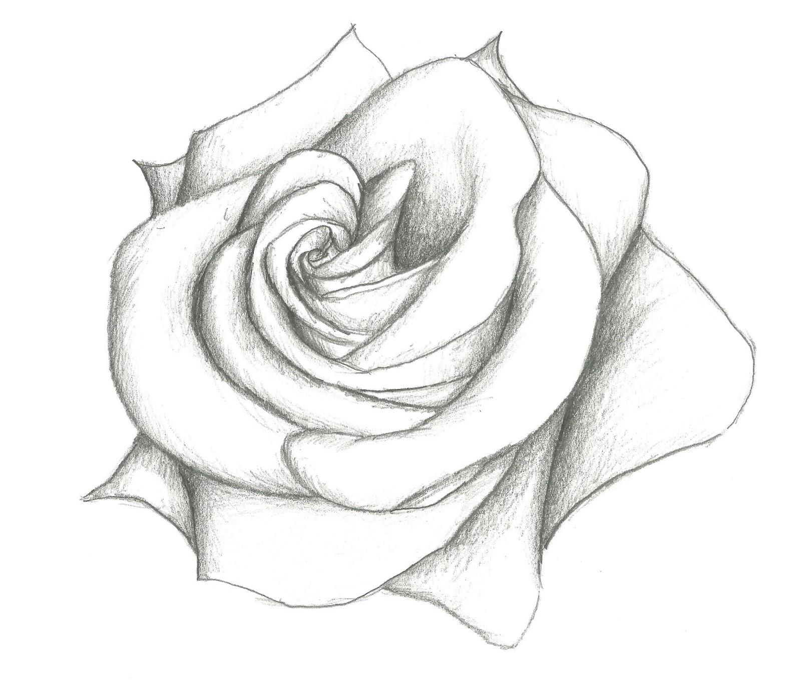 1600x1370 Simple Pencil Drawings Of Flowers