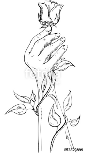 278x500 Hand Holding A Rose Stock Image And Royalty Free Vector Files