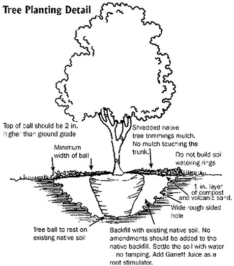 460x522 Planting Trees Can Increase Your Home Value