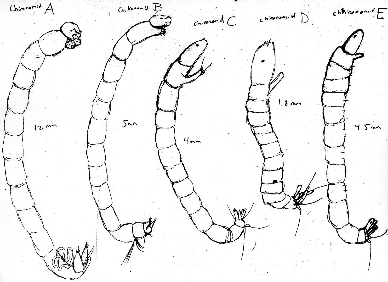 1620x1179 Tree Holes Larvae