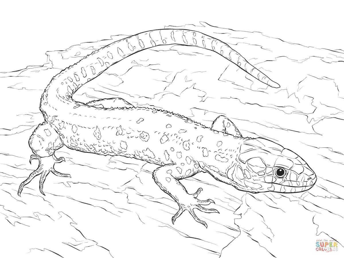 1200x900 Yellow Spotted Tropical Night Lizard Coloring Page Free