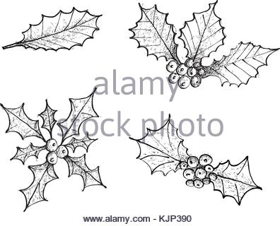 396x320 Holly Leaves And Berries Hand Drawn Icon, Outline Sketch Doodle