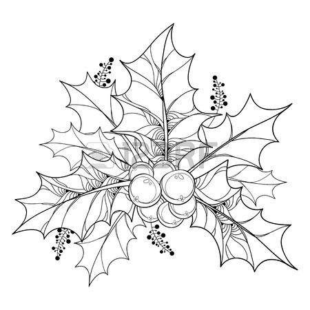 450x450 Vector Branch With Outline Leaves And Berries Of Ilex Or European