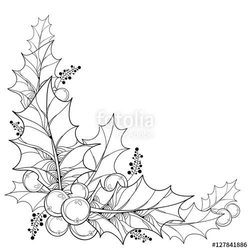 500x500 Vector Twig With Outline Leaves And Berries Of Ilex Or Christmas