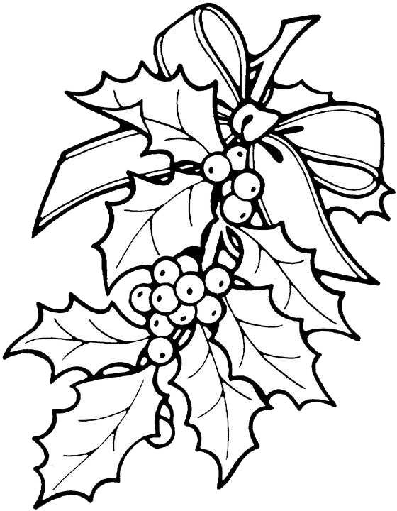 560x720 Gallery Christmas Holly Drawing,