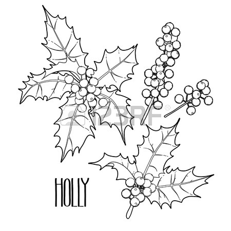 450x450 Christmas Collection Of Graphic Holly Leaves And Berries Drawn