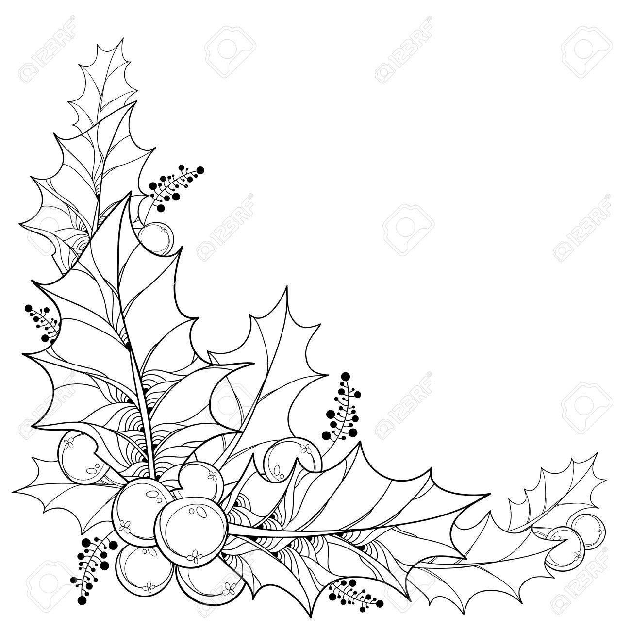 1300x1300 Vector Twig With Outline Leaves And Berries Of Ilex Or Christmas