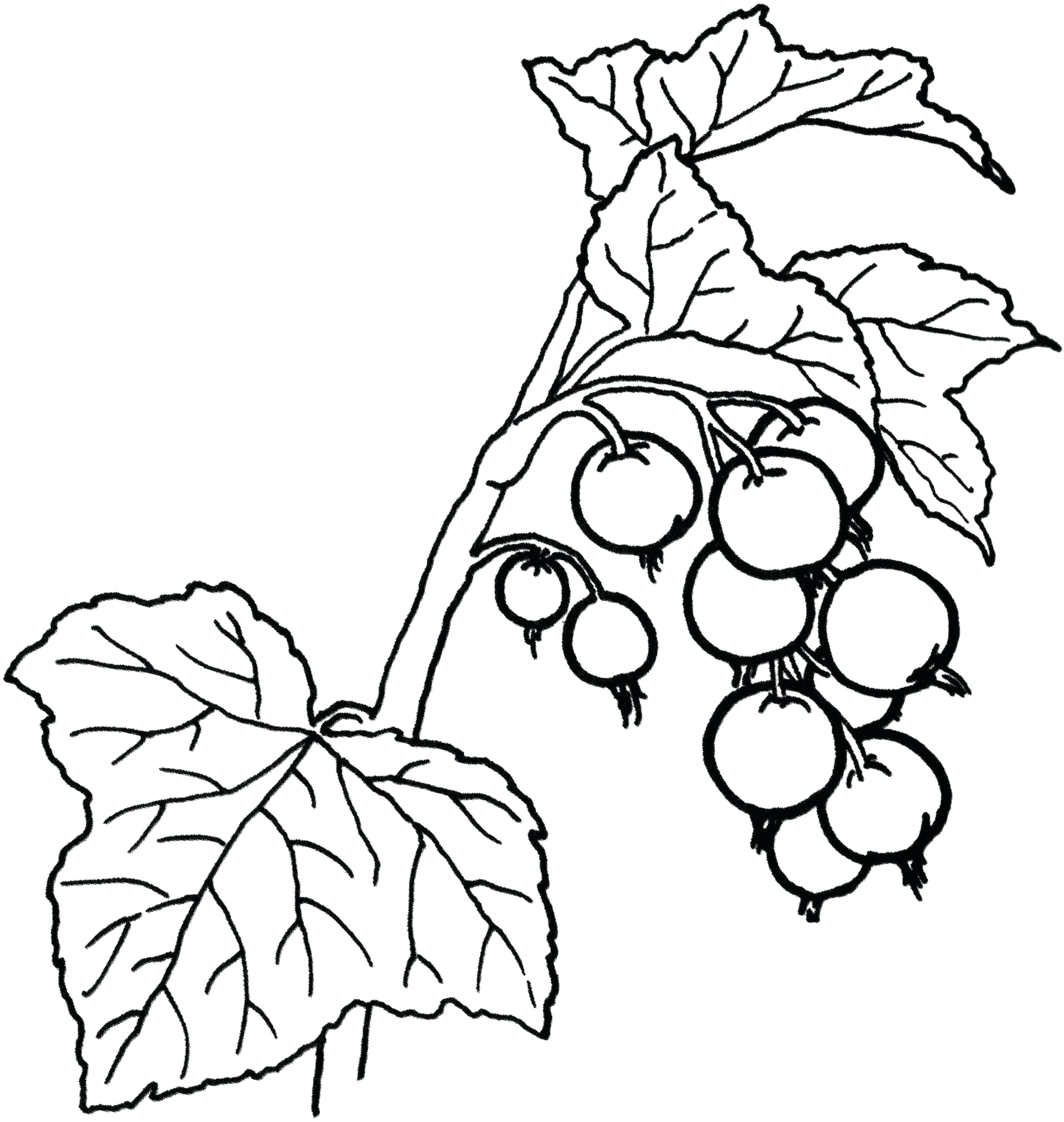 2873x3030 Coloring Holly Leaves Coloring Pages