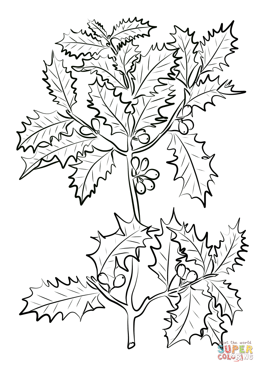 848x1200 Holly Coloring Pages Printable For Tiny Print Paint Printable