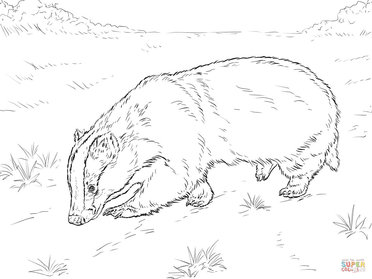 1199x899 European Badger Sniffing Ground Coloring Page Free Printable