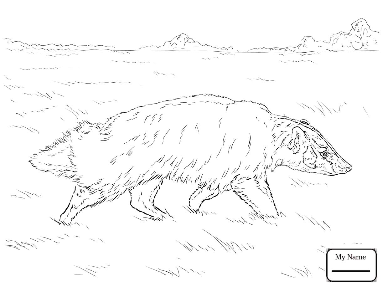 1223x917 Honey Badger Mammals Coloring Pages