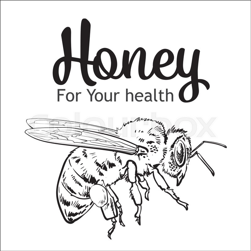 800x800 Flying Honey Bee, Sketch Style Vector Illustration Isolated