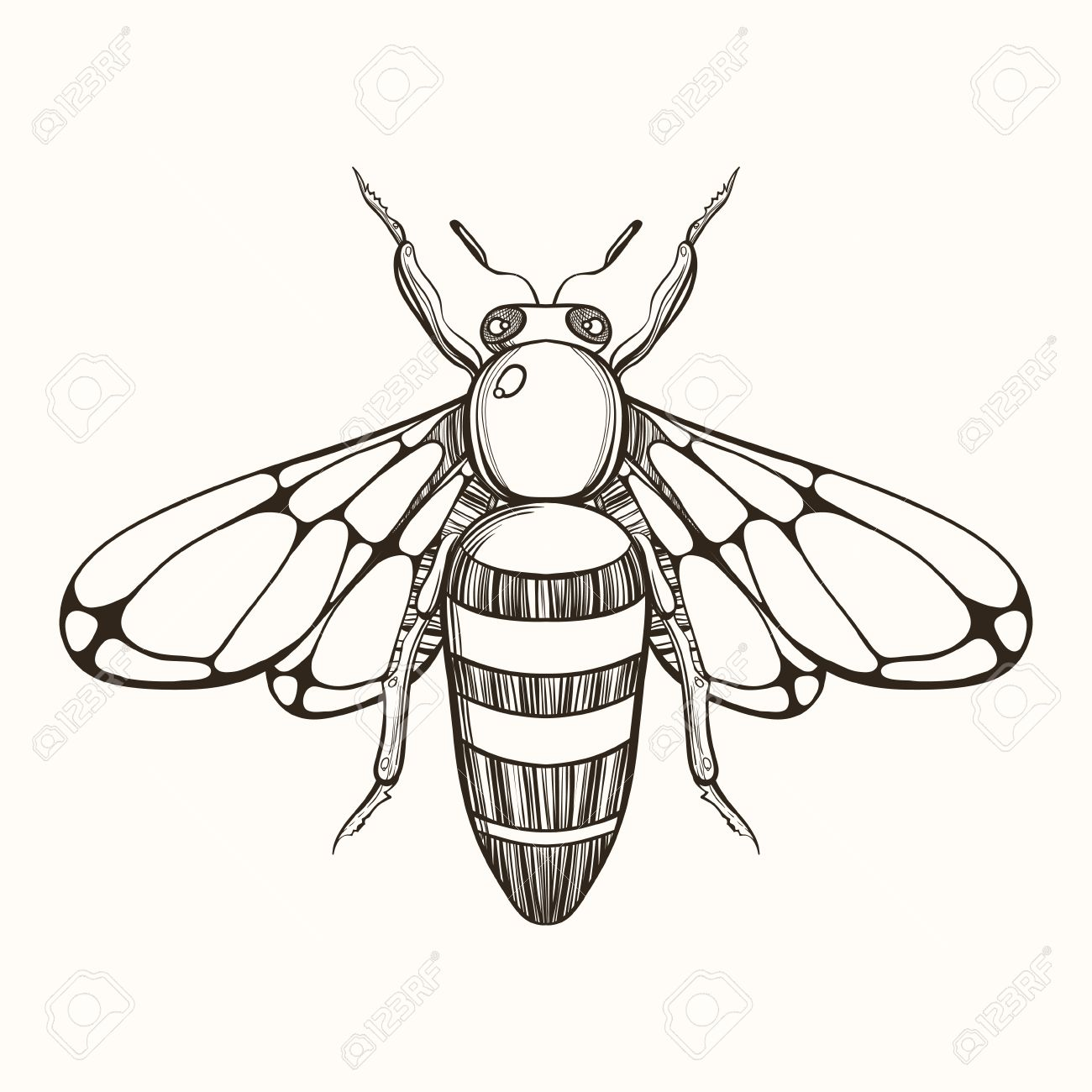 1300x1300 Hand Drawn Engraving Sketch Of Bee. Vector Illustration