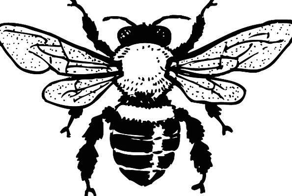 595x399 Honey Bee Pixcove