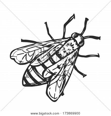 450x470 Honey Bee Freehand Pencil Drawing Vector Amp Photo Bigstock