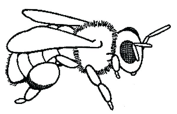 600x385 Honey Bee Pictures To Color Bee Coloring Page Packed With Baby