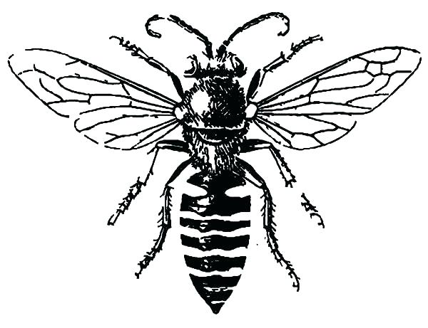 600x461 Awesome Honey Bee Coloring Page Image Pages Drawing Kids