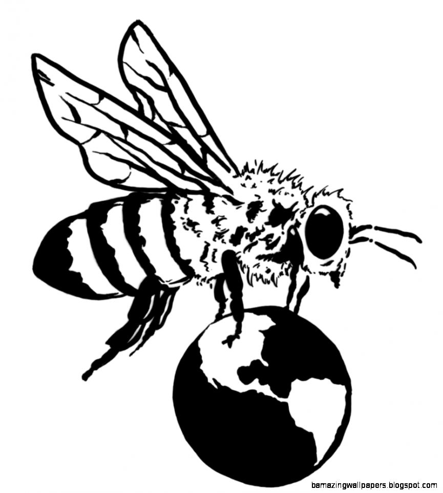 865x964 Honey Bee Scientific Drawing Amazing Wallpapers