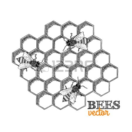 450x450 Honey Bees And Honeycomb Isolated Vector Illustration Royalty Free