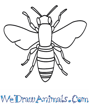 300x350 How To Draw A Bee
