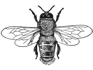 323x245 Public Domain Honey Bee Drawing