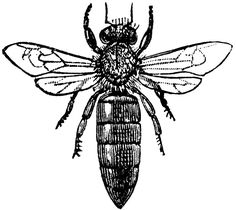 236x210 Vintage Queen Bee Drawing From 1910. Love These Old Encyclopedia