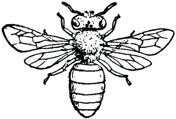 600x407 Bees Coloring Pages Synthesis.site