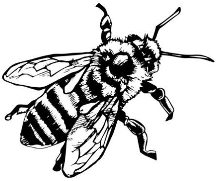 444x372 Line Drawing Bee