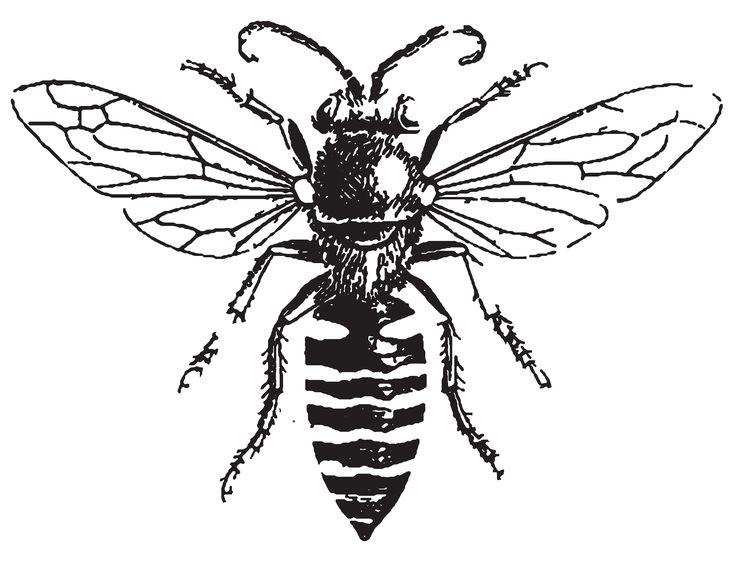 736x565 Bee Drawings Drawings Of People Fighting Bee Line Art Images