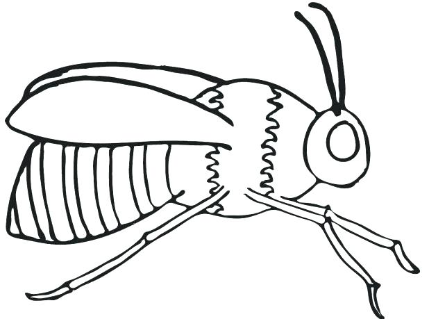 618x459 Bee Pictures To Color Coloring Pages Draw A Bee Free Cute Bumble