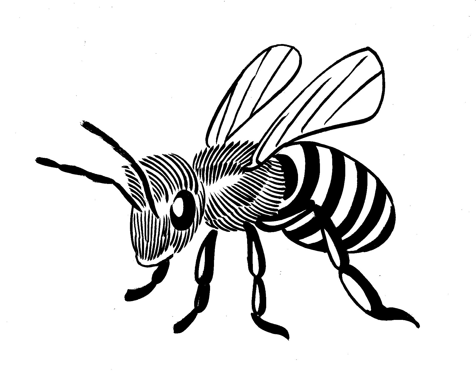 1824x1428 Bee Line Art More Bugs Amp Animals Steve Lafler Comics