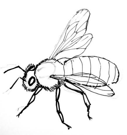 Honey Bee Line Drawing