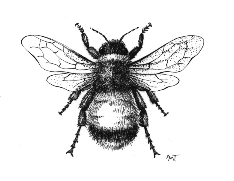 Line Drawing Bee : Honey bee line drawing at getdrawings free for