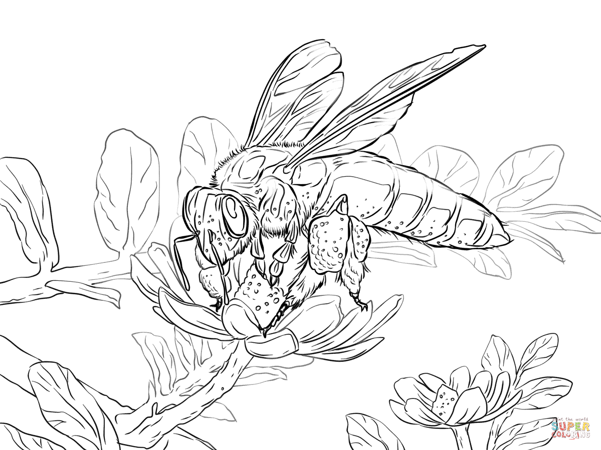 1199x899 Giant Honey Bee Coloring Page Free Printable Pages