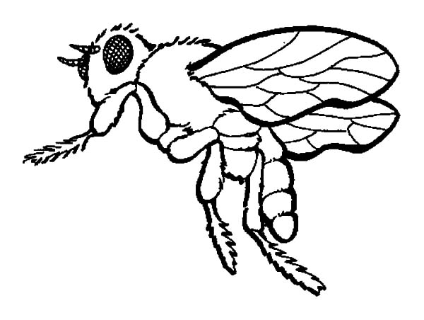 600x452 Honey Bee Coloring Pages Kids Honey Bee Coloring Pages