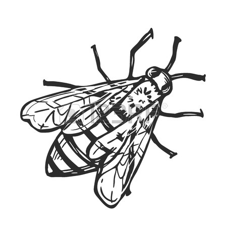 450x450 Honey Bee Freehand Pencil Drawing Isolated On White Background