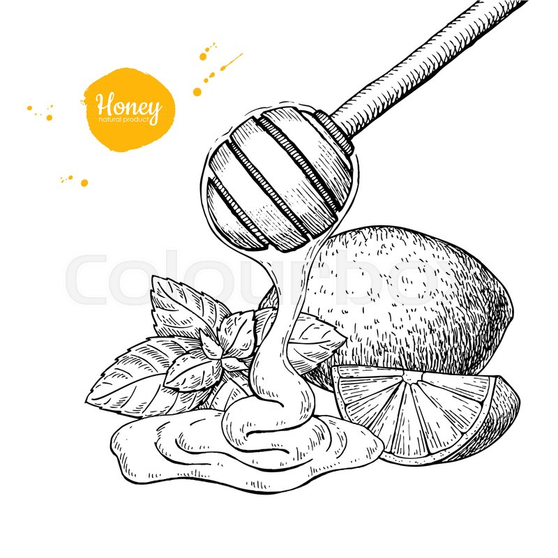 800x800 Honey With Lemon And Mint Vector Drawing. Wooden Spoon, Honey Drop